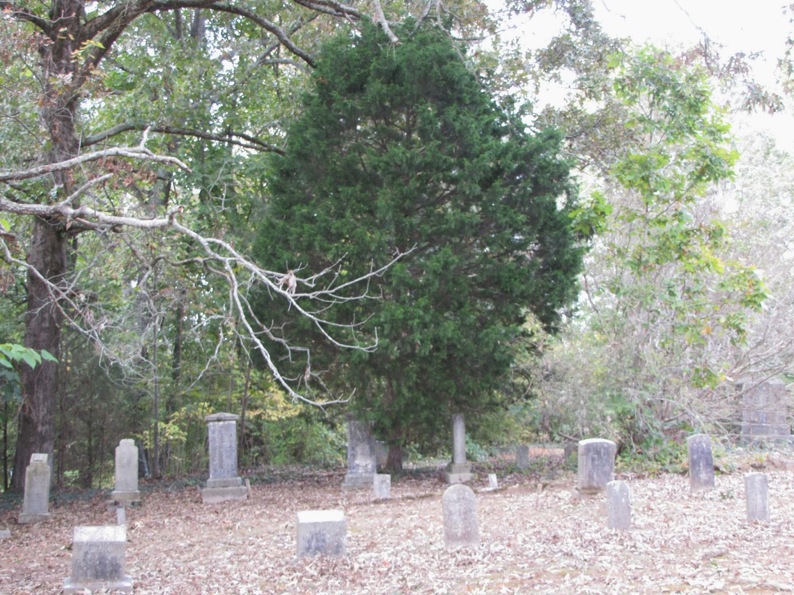 Faith folklore and friends cedar trees in cemeteries if you ever wander in old cemeteries and i know many of you do you are bound to see some cedar trees buycottarizona Images