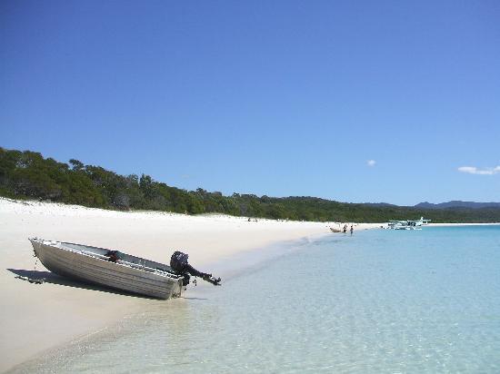 bots in sydney australia