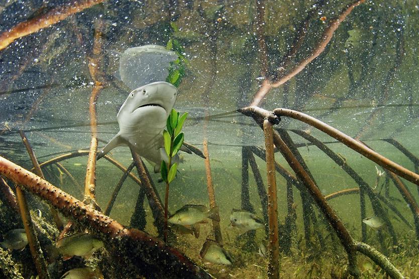 Brian Skerry - Underwater Photographer