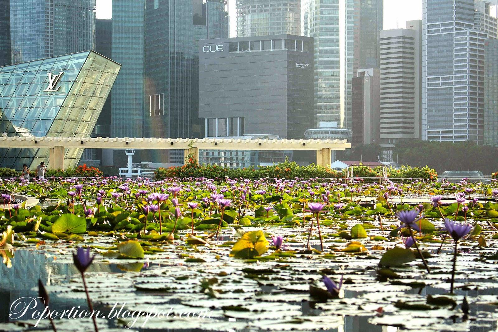 marina bay sands mall pond lotus leaves purple flowers