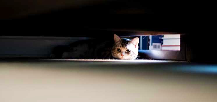 Kucing bersembunyi di bawah katil