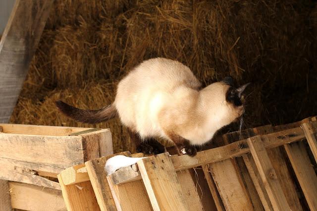 Karma in the haymow