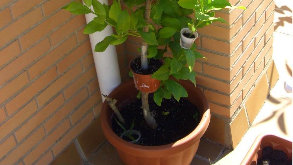 plantas de jardins tipos : plantas de jardins tipos:Flores e Jardins, plantas, jardinagem e paisagismo: Tipos de