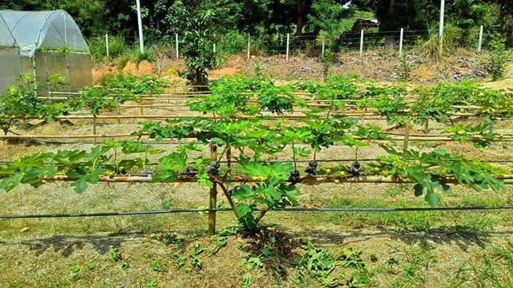 Delizia Garden Part 3