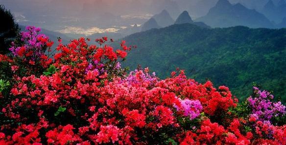 Fotos de flores de autos cars for Rosas chinas