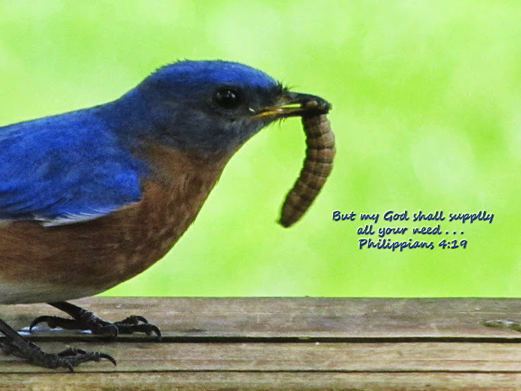Bluebird with Grub - Phil. 4:19