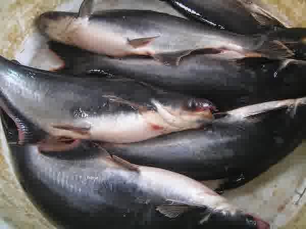 Bisnis Ikan Rumahan