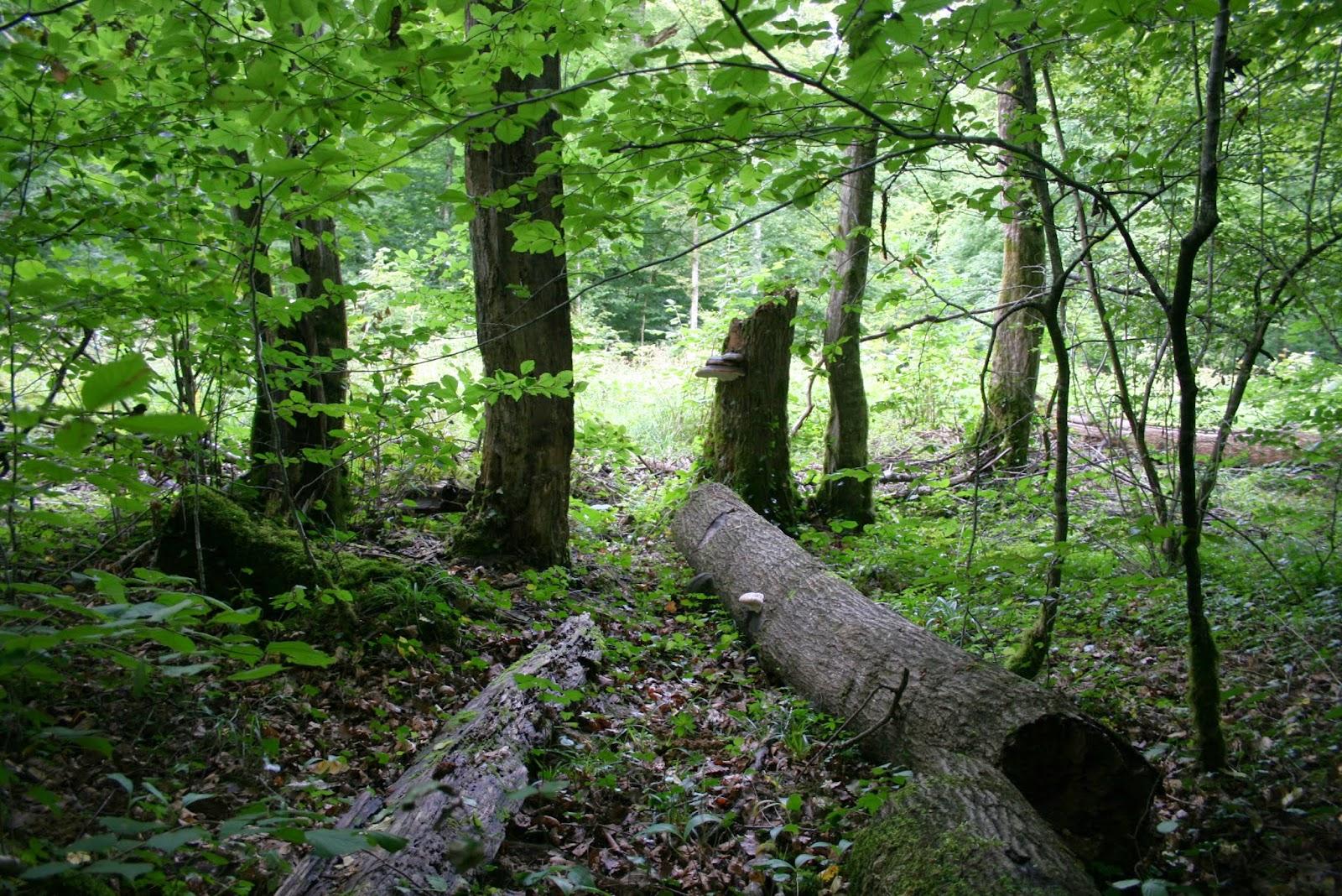 Permafor t champignons comprendre pr server et trouver les champignons comestibles - Les champignons de jardin sont ils comestibles ...