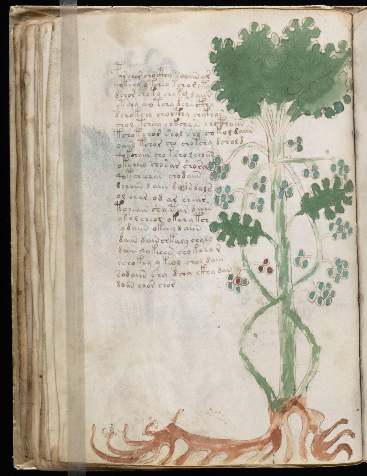 Voynich Manuscript Yale Wikipedia 39 s Voynich Manuscript