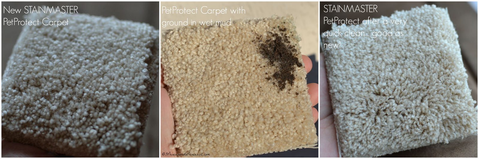 STAINMASTER PetProtect Carpet Helps #UnShameYourPet #MC (Sponsored)