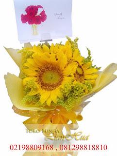 rangkaian indah bunga matahari
