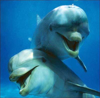 http://2.bp.blogspot.com/-I2n3QeX6P-s/TZMCtsXGrsI/AAAAAAAAAtM/dvUpJebYct0/s1600/Happy-Smiling-Animals-021.jpg