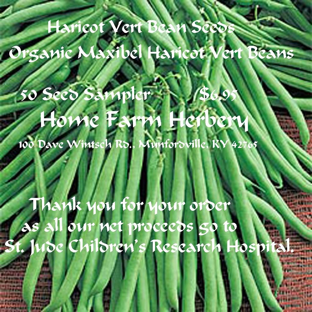 Haricot Vert Beans Haricot Vert Bean Organic