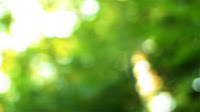 A beautifully bokeh point of view of lush green trees as seen from someone standing in the woods