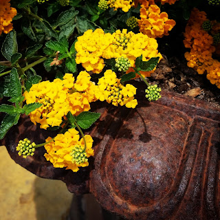 Primavera en amarillo