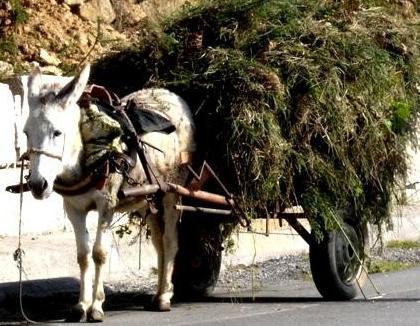 ANIMALES FOTOS DIBUJOS IMAGENES: FOTOS DE BURROS o ASNOS