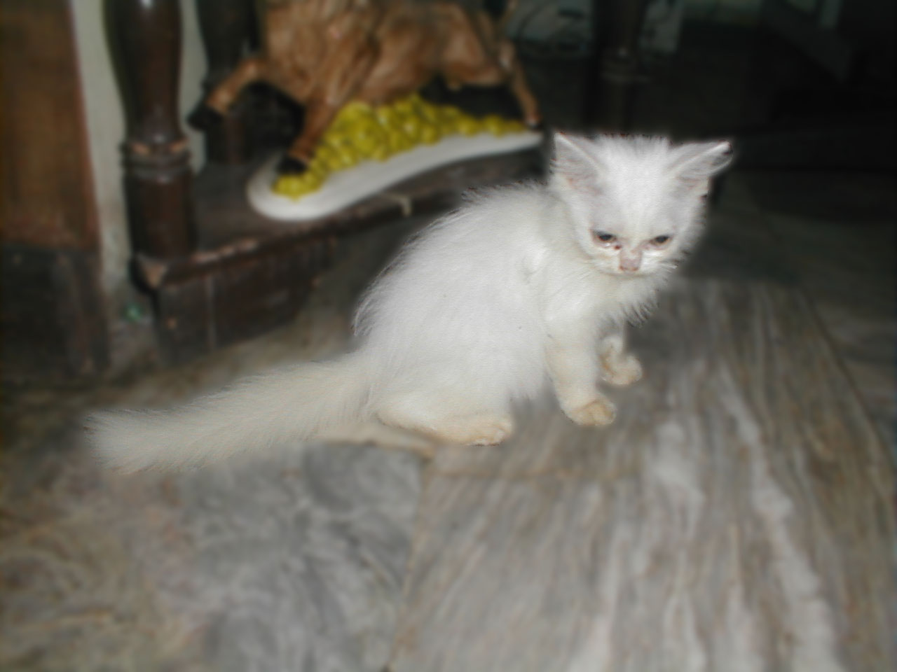 Persian Cats in the Philippines More Than the Breed Standard