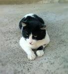 Questo blog ama i gatti…