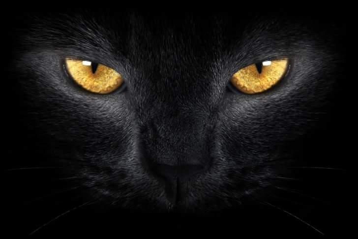 Miau...