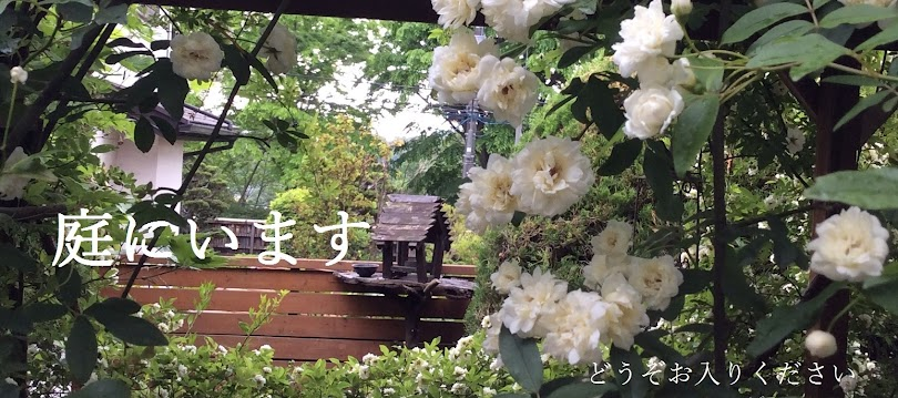 庭にいます