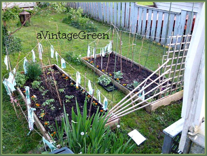a Vintage Green Raised Garden Beds and Flowering Bushes