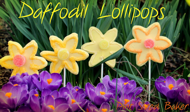 Daffodil Lollipops
