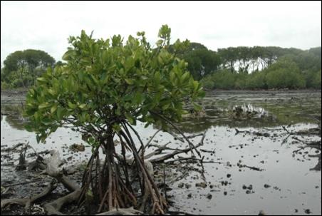 Ekologi Macam Macam Ekosistem Pantai Kumpulan Soal Soal Dan Kunci Jawaban Uas Uts Dan Usun