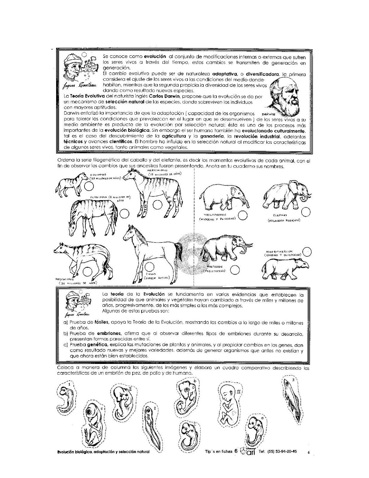 Ejercicios de la evolución para niños