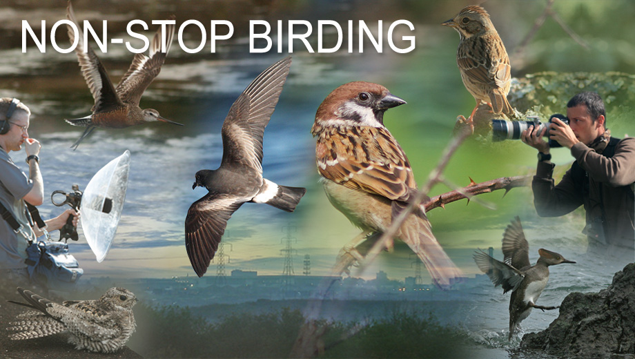 Non-Stop Birding