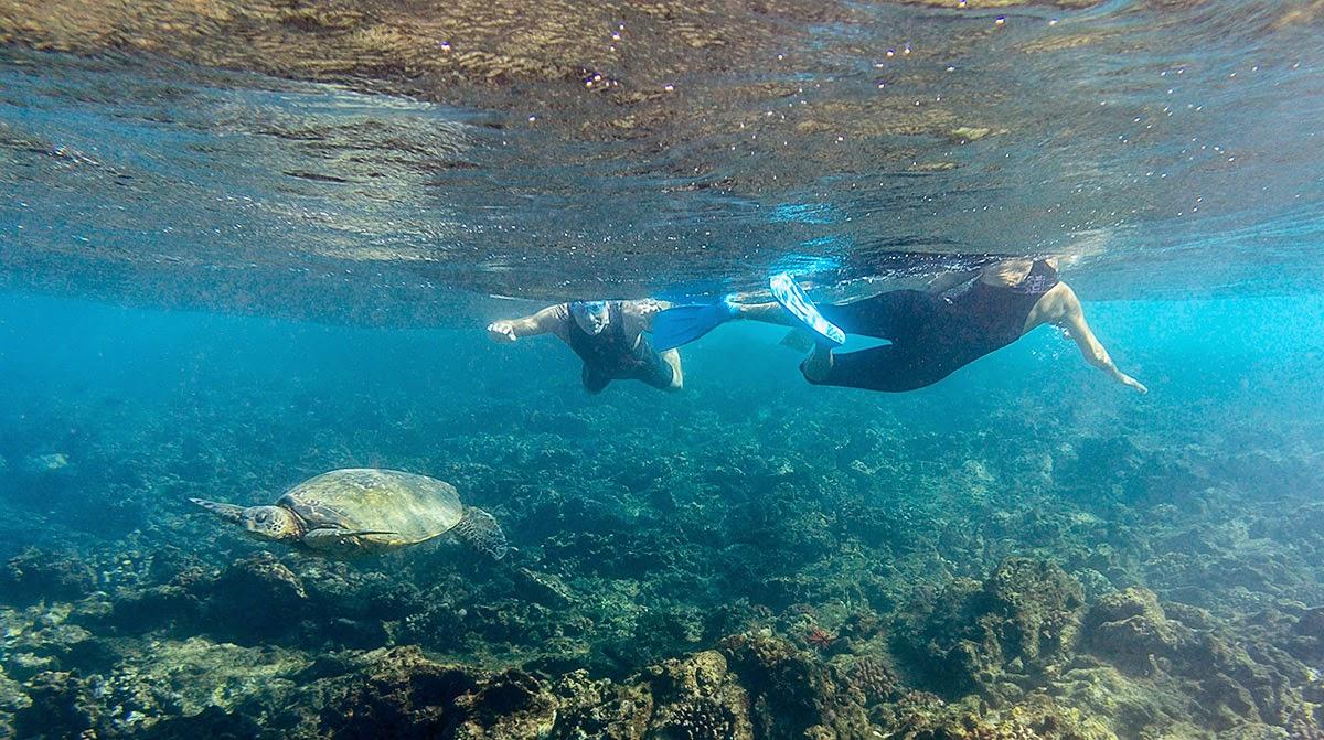http://www.tropicallight.com/swim1/28dec14sm/28dec14sm.html