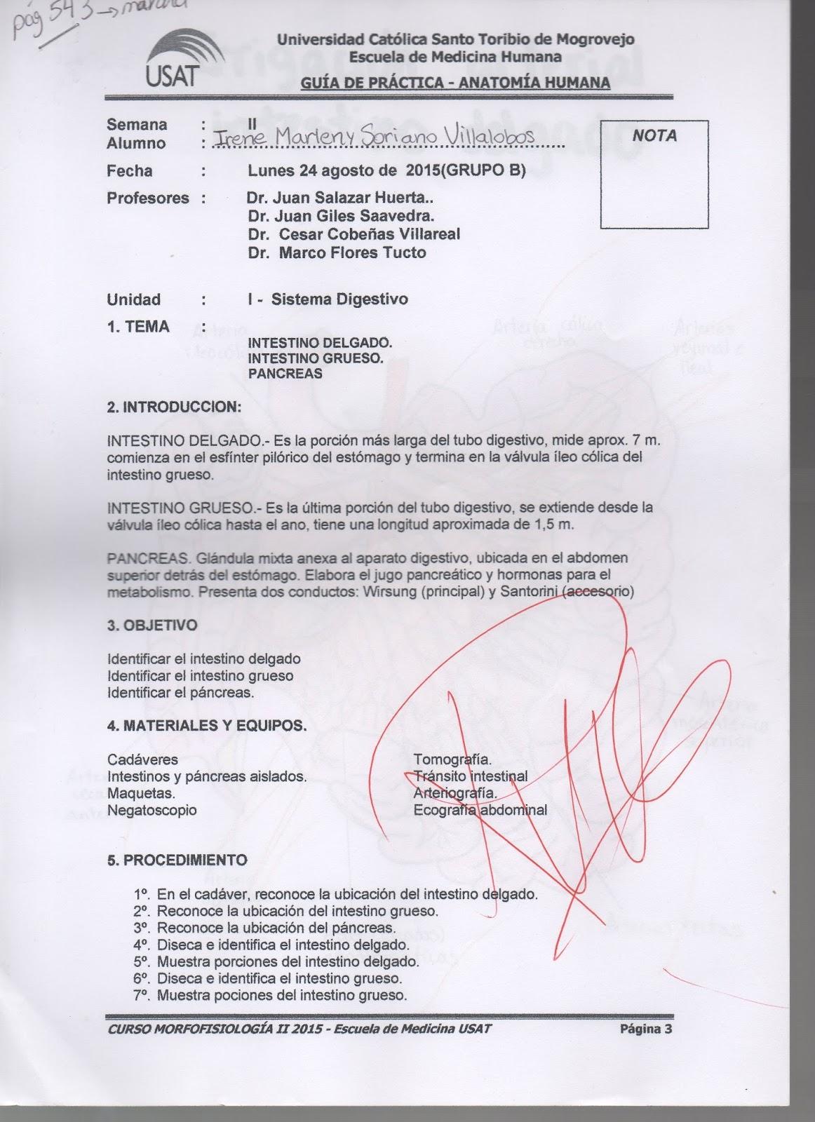 CAMINO DEL ESTUDIANTE DE MEDICINA : DIBUJOS ANATOMÍA: SEMANA II ...