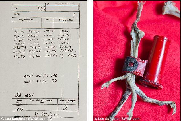 Encuentran esqueleto paloma mensajera Segunda Guerra Mundial