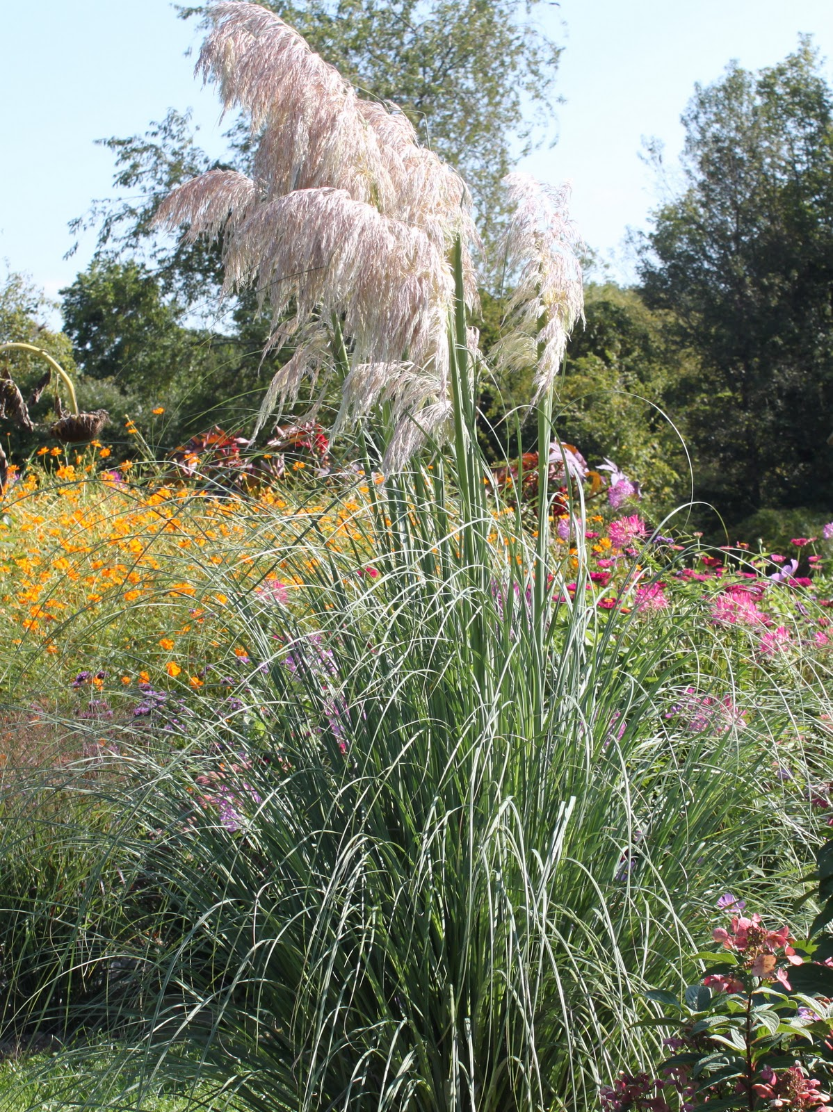 Gardening for wildlife for Tall grass with plumes