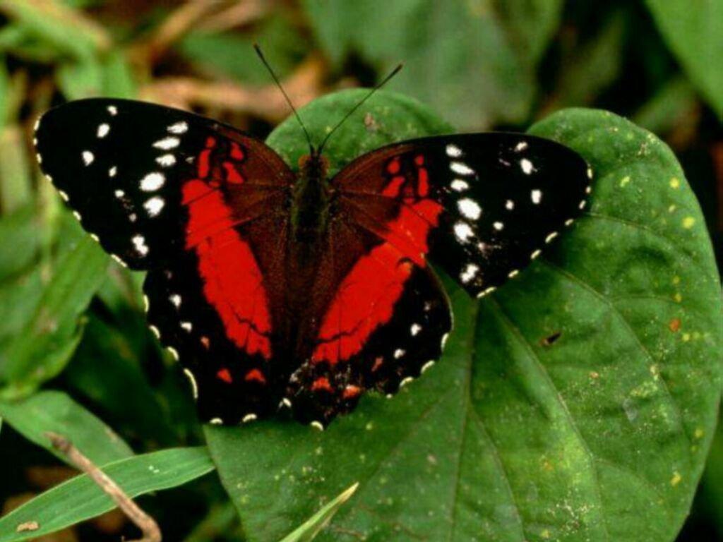 Los animales y la naturaleza: Animales aéreos