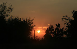 The sun goes down behind the trees