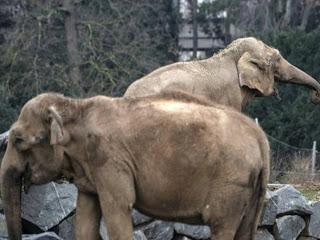 familia real adota elefantes