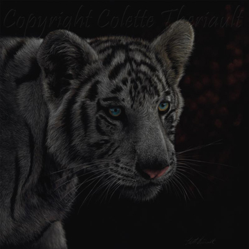 white tiger cub painting in pastel by Canadian wildlife artist Colette Theriault