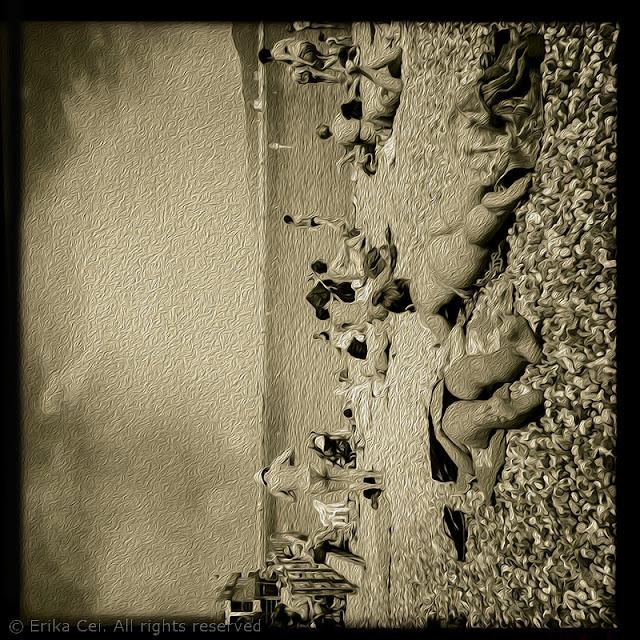 Pedocin Trieste