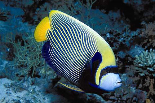 Le commerce des animaux for Poisson tropicaux pour aquarium