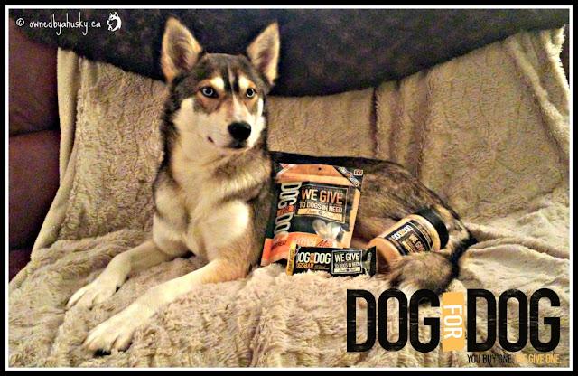 natural dog treats at Petsmart