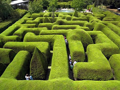 A green hedge maze