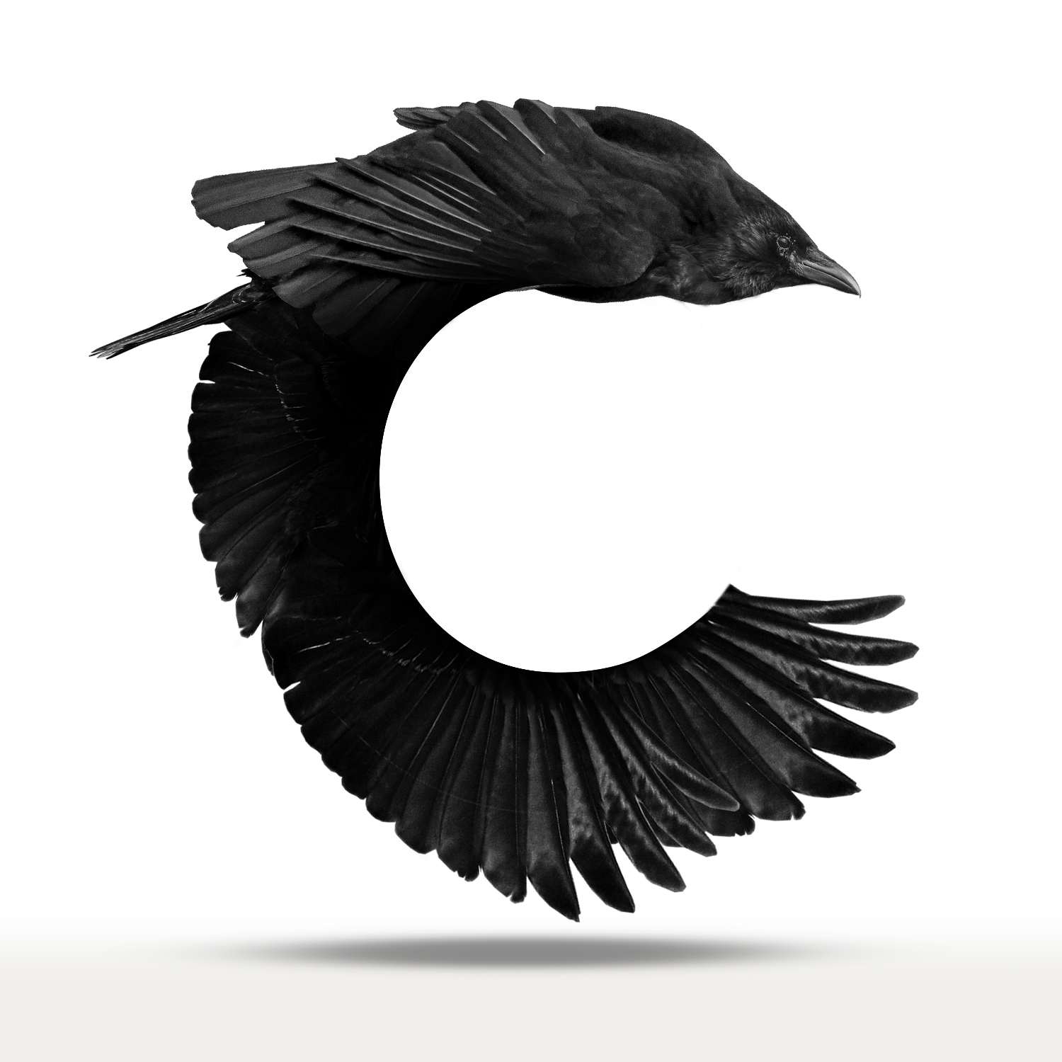 C is for Crow
