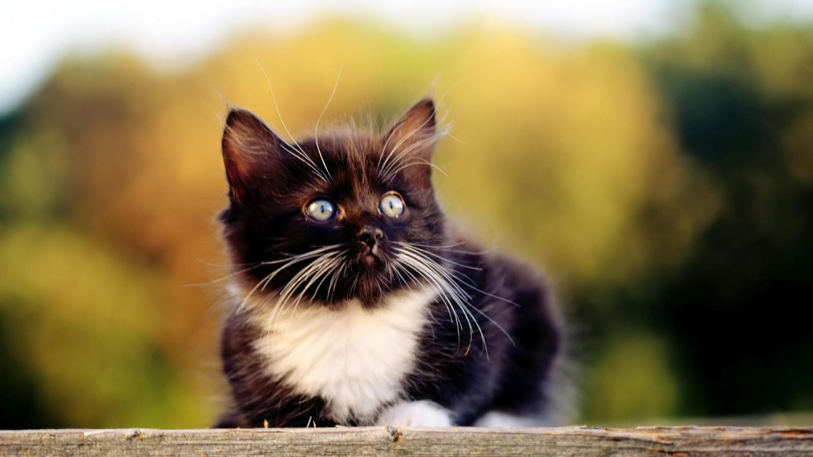 Worlds all amazing things picturesimages and wallpapers cute cute kitten wallpapers altavistaventures Image collections
