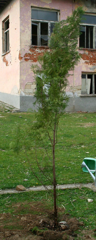 My new tree