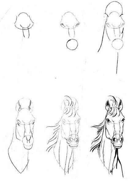 Como Dibujar Un Caballo Paso A Lapiz Imagui
