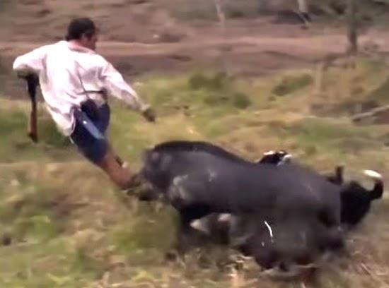 Wild Boar Attacks Human Crazy Top 10 Wi...