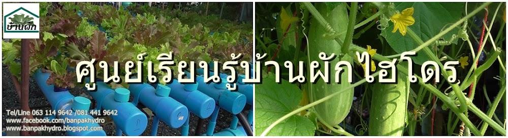 บ้านผักไฮโดร,Banpak,hydroponic,ผักไฮโดร,banpakhydro,[hkozyd,บ้านผัก,อบรมผักไฮโดร,ปลูกผักไฮโดร,