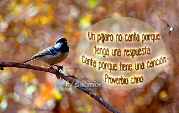 Un pájaro no canta - Imágenes con frase - tiene una canción