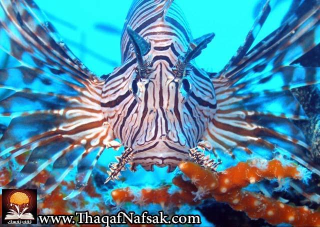 أجمل 10 أسماك ملونة في عالم البحار '' بالصور '' 5.jpg
