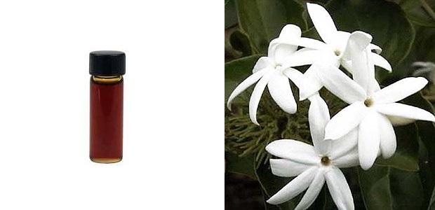 Absolut jaśminu i kwiat jaśminu (sambac)